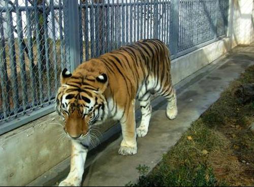 苏州景点 - 动物园 - 风景如画 - 有风无度工作室
